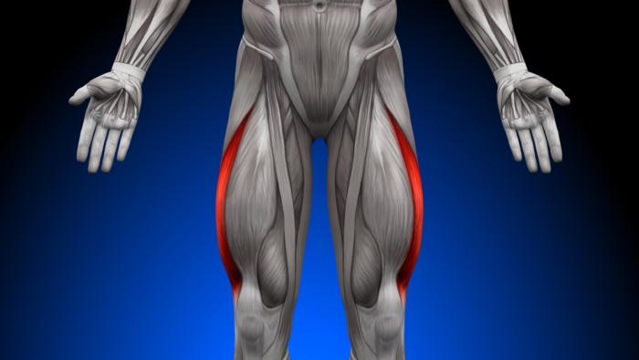5 best leg exercises for strong leg