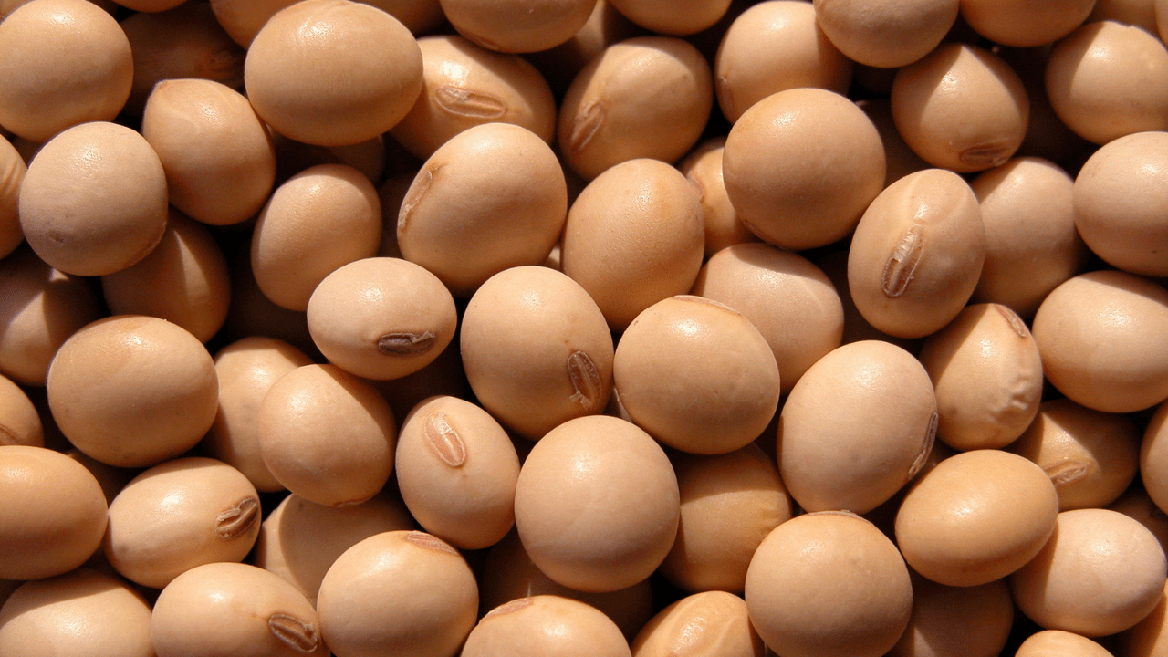 soybean - what to eat build muscle